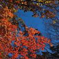 写真: '14紅葉狩 秋の入口
