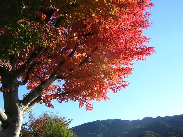 '12紅葉狩 相模湖公園