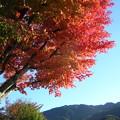 写真: '12紅葉狩 相模湖公園