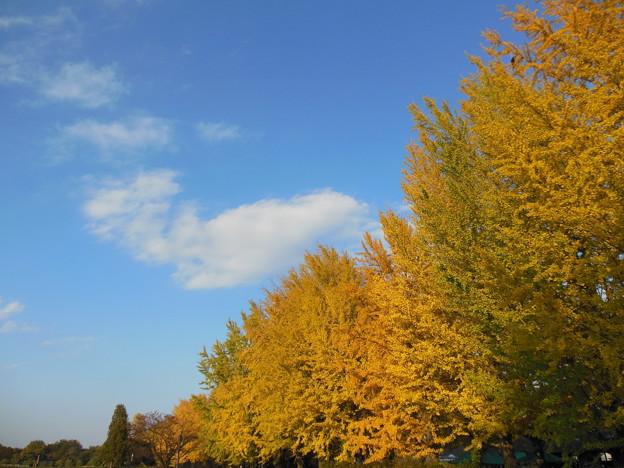 写真: '13黄葉狩 冬の入り口