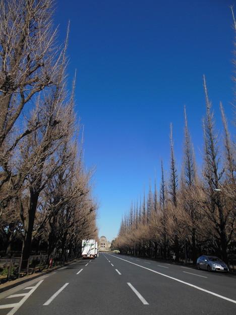 トンガリトンガリ~冬の並木道