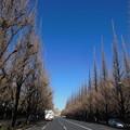 写真: トンガリトンガリ~冬の並木道