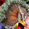Photos: Pineapple バイナップル