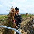 Photos: ハサがけ'09 (17)