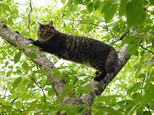 木登り猫さん