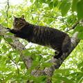 写真: 木登り猫さん