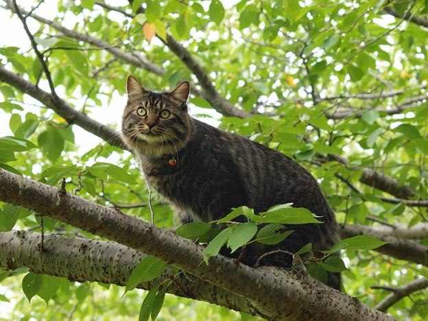 枝の上から見回り猫さん