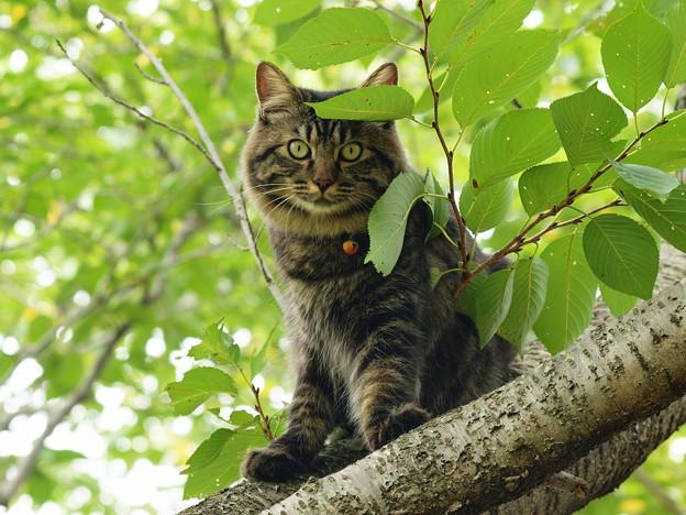桜木の上からじ~っと