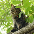 写真: 桜木の上からじ~っと