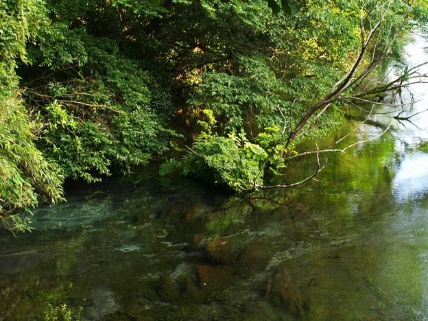 湧水の初秋