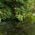 Photos: 湧水の初秋