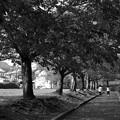 写真: ふたりで歩む桜並木 *b