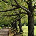 写真: 秋の桜並木
