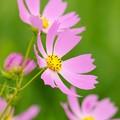 Photos: 秋色に咲く