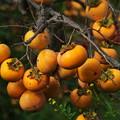 写真: 秋の旬、秋の果物 *d