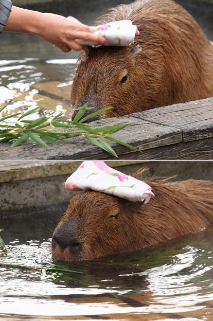 頭の上に湯手を乗せて…極楽・極楽~♪