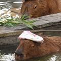 写真: 頭の上に湯手を乗せて…極楽・極楽~♪