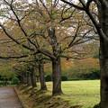 写真: 秋雨に濡れた桜並木