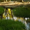 写真: 水面に映える秋色 *b