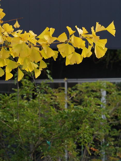 秋色と緑葉と *a