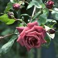 写真: 秋の香り漂う *c