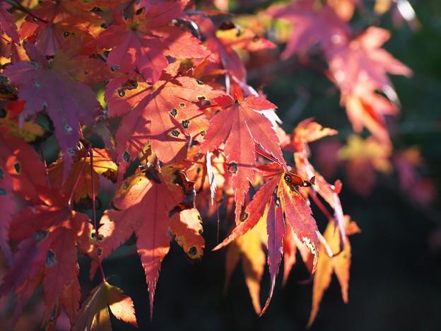 虫食いだらけの秋色模様