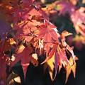 写真: 虫食いだらけの秋色模様