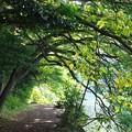 写真: 湖畔の秋は…
