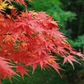 写真: 秋色緑色