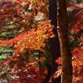写真: 晩秋の虹の郷 *a