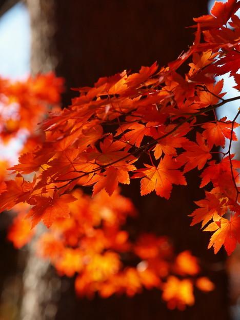 写真: 晩秋の虹の郷 *c