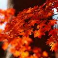 晩秋の虹の郷 *c