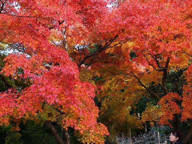 写真: 見入る秋、垂れる秋色 *b