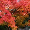 Photos: 見入る秋、垂れる秋色 *b