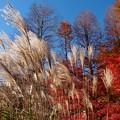 晩秋の青空の下