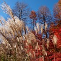 写真: 晩秋の青空の下