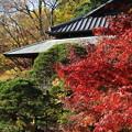 写真: 晩秋の楽寿館と庭園
