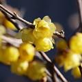 新春の香り *b