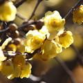 新春の香り *c