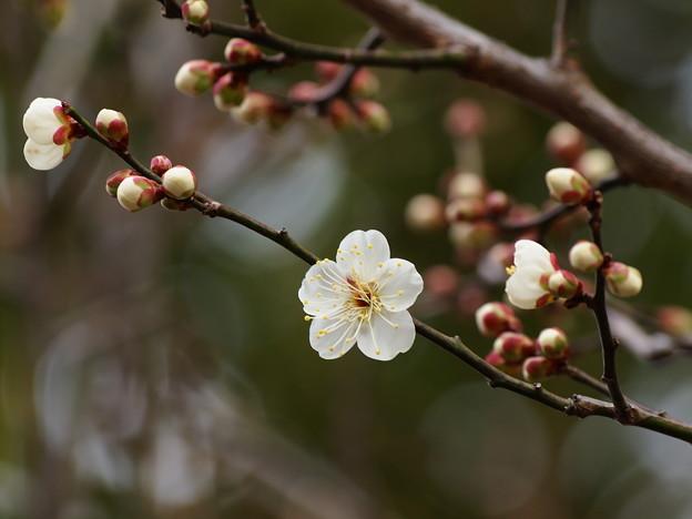 せせらぎに漂う春の香り *b