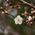 写真: せせらぎに漂う春の香り *b