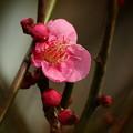せせらぎに漂う春の香り *d
