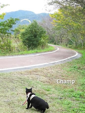 チャンプの散歩10