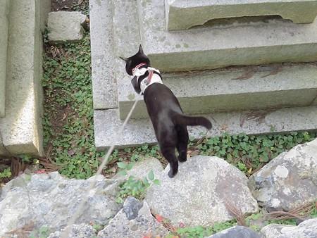 お散歩は神社21