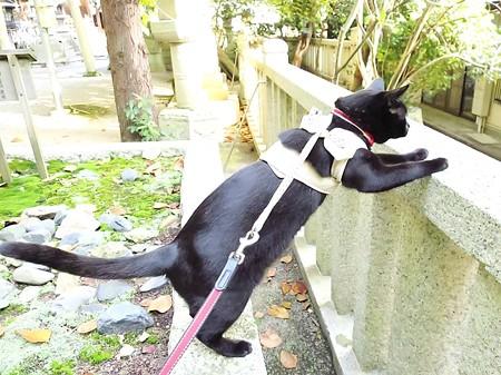 お散歩は神社26