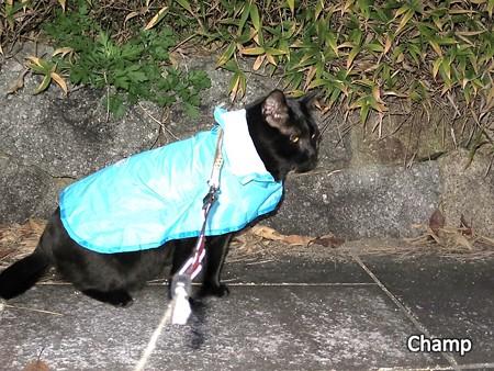 寒い日もお散布チャンプ11