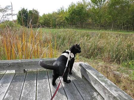 静かに歩く秋散歩8