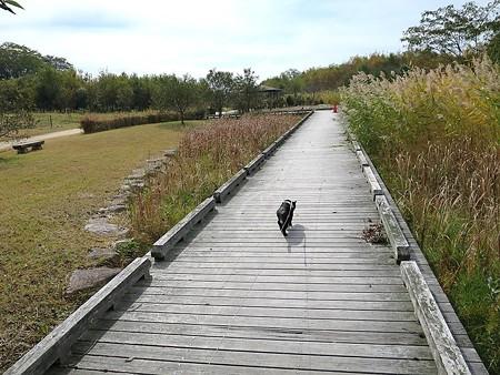 静かに歩く秋散歩16