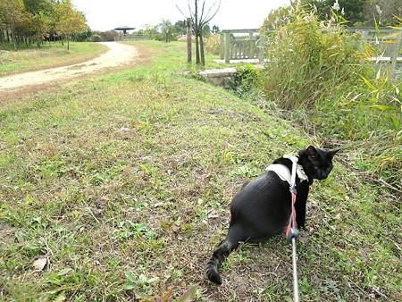静かに歩く秋散歩34