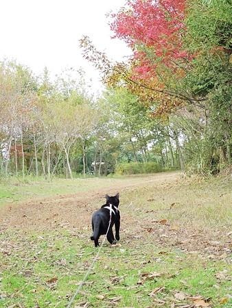 静かに歩く秋散歩38